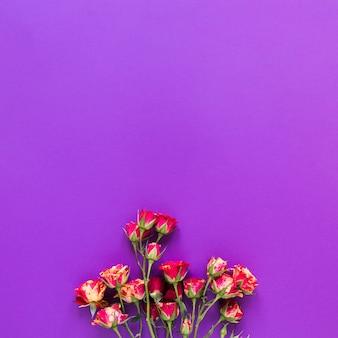 Odgórnego widoku bukiet goździków kwiaty na fiołek kopii interliniuje tło