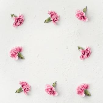 Odgórnego widoku goździk kwitnie z kopii przestrzenią
