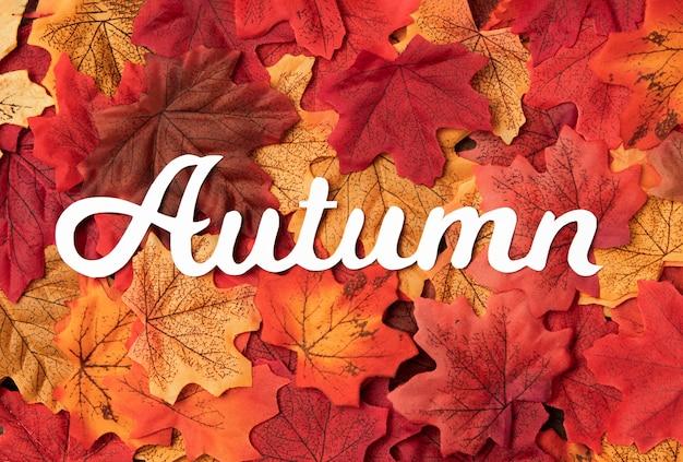 Odgórnego widoku jesieni podróży pojęcie z liśćmi
