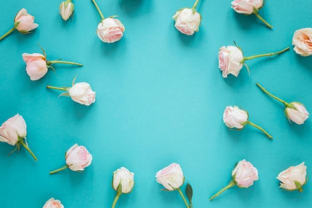Odgórnego widoku wiosny białe róże z kopii przestrzenią