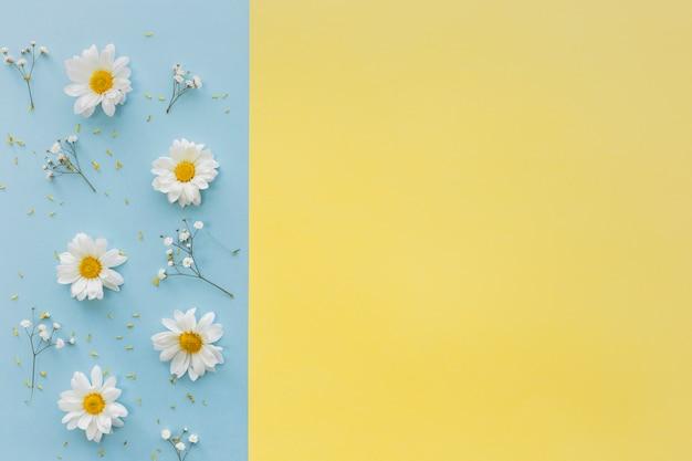 Odgórny widok białej stokrotki kwiaty i dziecko oddech kwitniemy na podwójnym tle