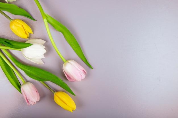 Odgórny widok biali koloru żółtego i menchii koloru tulipanu kwiaty odizolowywający na koloru tle z kopii przestrzenią