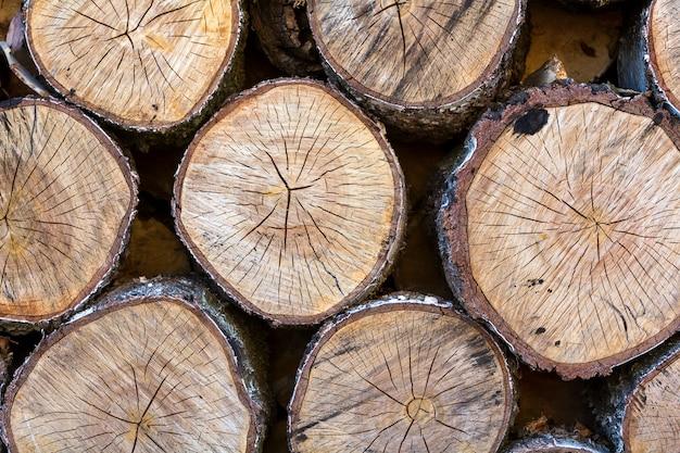 Odgórny widok duży stary kółkowy miękki brown rocznik trzaskał drewnianych drzewnych fiszorki ciących w sekci dla sceny, papierkowej roboty projekta tekstury użycie.