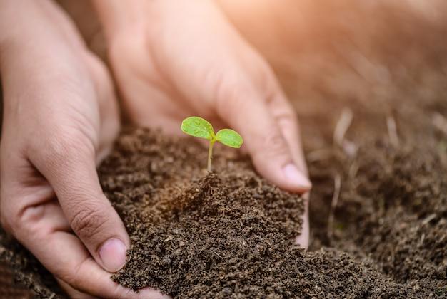 Odgórny widok dziecka drzewo z ziemią w tle. koncepcja dzień ziemi.