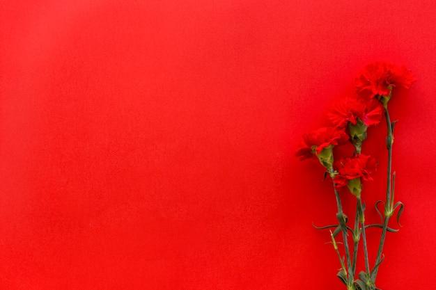 Odgórny widok goździków kwiaty przeciw jaskrawemu czerwonemu tłu z kopii przestrzenią