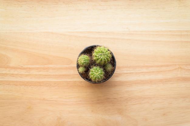 Odgórny widok kaktus na drewnianym tle z kopii przestrzenią