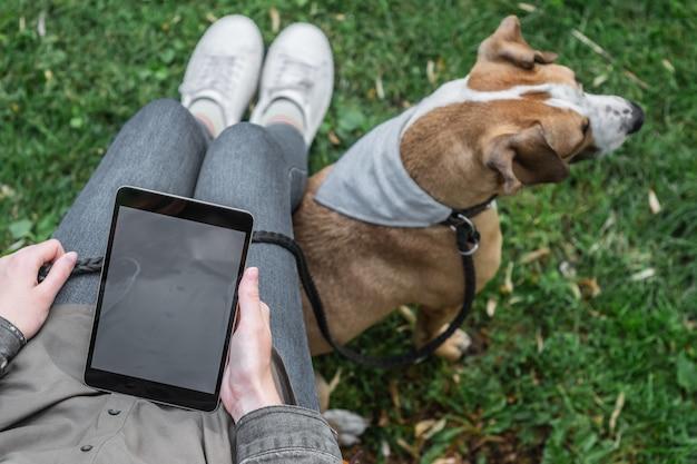 Odgórny widok kobieta z pastylka komputerem siedzi przy gazonem z jej ślicznym szczeniakiem. samica surfuje po internecie na zewnątrz w parku ze swoim wyszkolonym psem staffordshire terrier