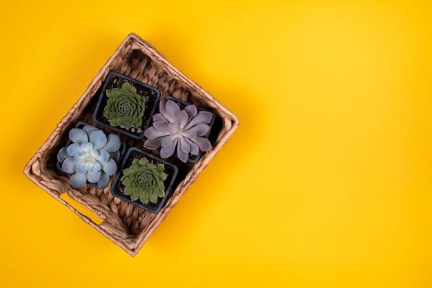Odgórny widok kosz rośliny na koloru żółtego stole