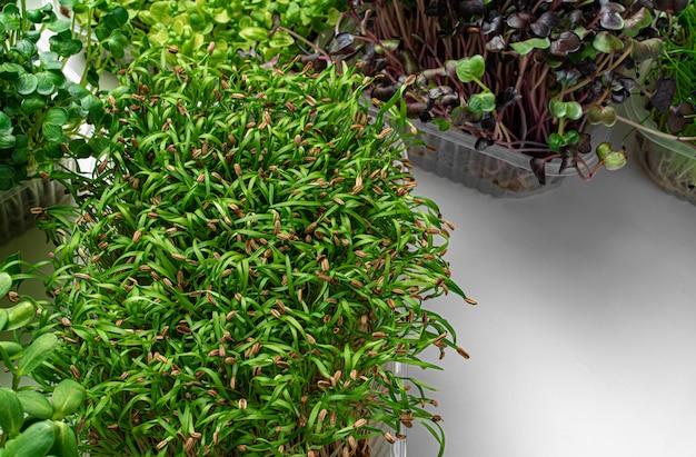 Odgórny widok mikro zielone tace na białym tle