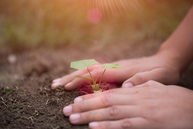 Odgórny widok młody drzewo z ziemią w tle. koncepcja dzień ziemi