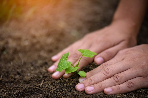 Odgórny widok młody drzewo z ziemią w tle. koncepcja dzień ziemi.