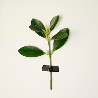 Odgórny widok zielona roślina z liśćmi