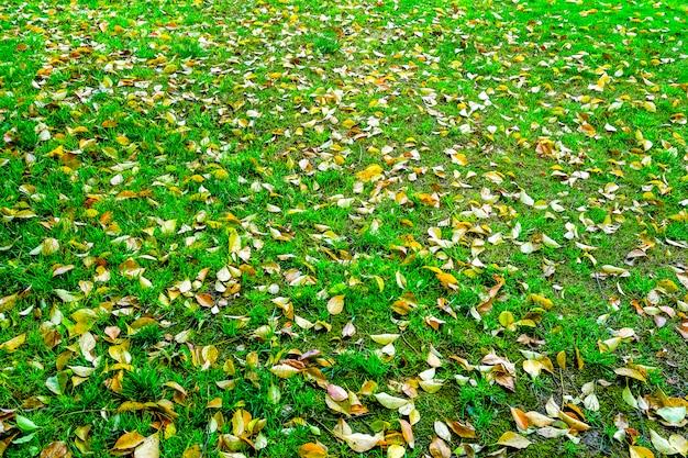 Odkryty krajobraz trawnik pastwiska tle upraw