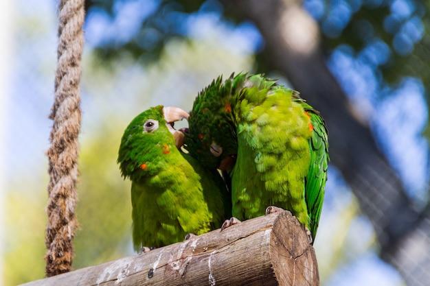 Odkryty papuga w parku w rio de janeiro, brazylia.