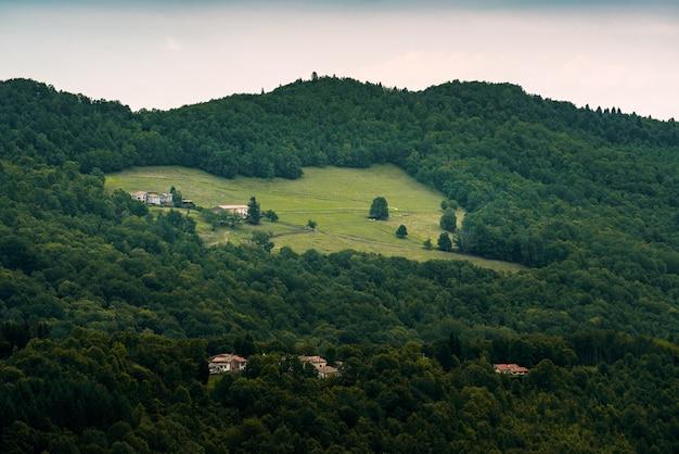 Odległa farma na wsi wśród sosnowego lasu zielona sceneria
