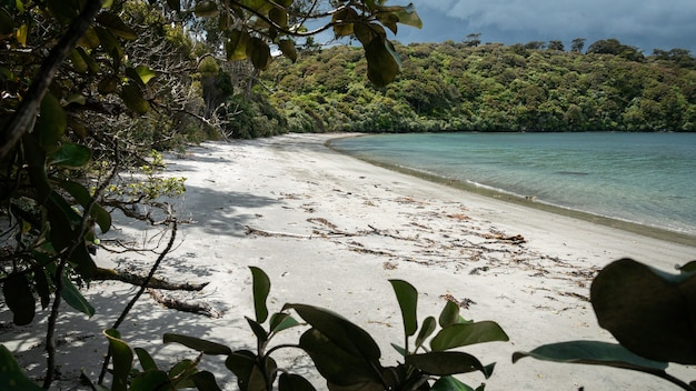Odległa plaża z białym piaskiem częściowo otoczona gałęziami drzew wyspa stewart nowa zelandia