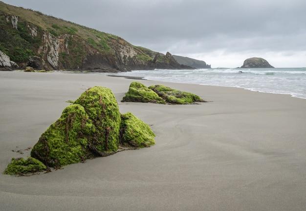 Odległa plaża z omszałymi skałami na pierwszym planie podczas pochmurnego dnia plaża allans dunedin nowa zelandia