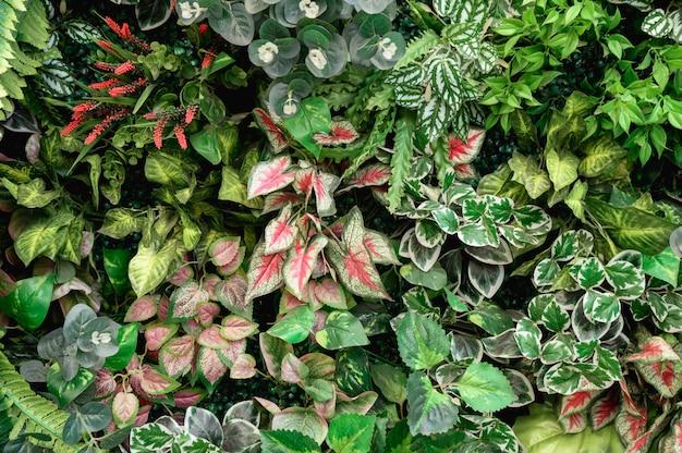 Odmiana zielonych liści z rośliną dekoracyjną na ścianie