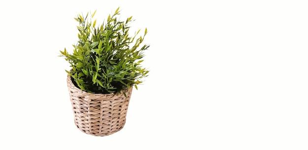Odosobniona roślina biurowa na drewnianej misce. pasuje do twojego elementu projektu.