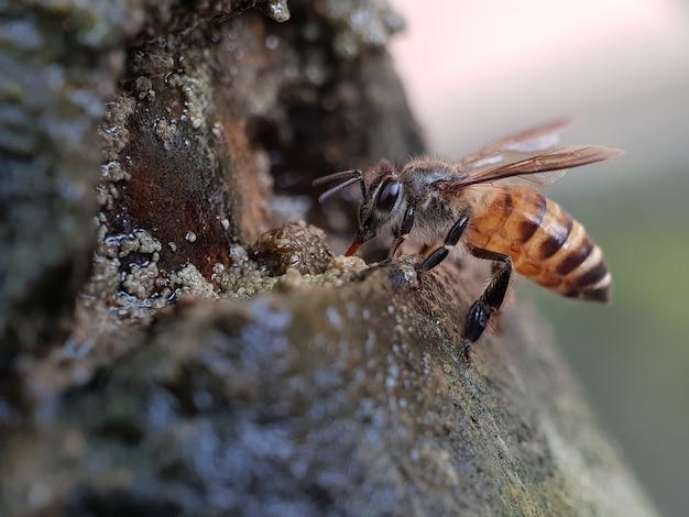 Odosobniony insekt na zielonej naturze, makro- fotografia