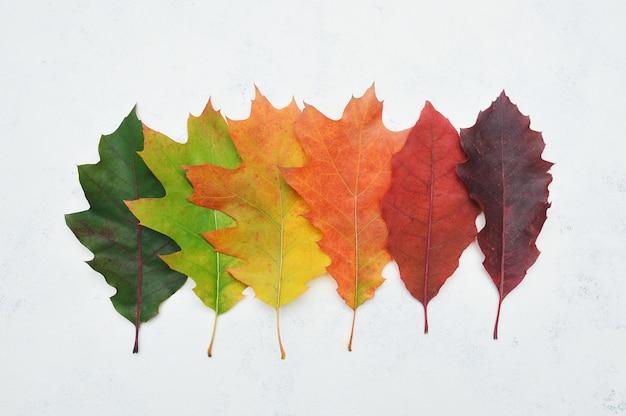 Odosobniony jesień gradient opuszcza na bielu. leżeć płasko