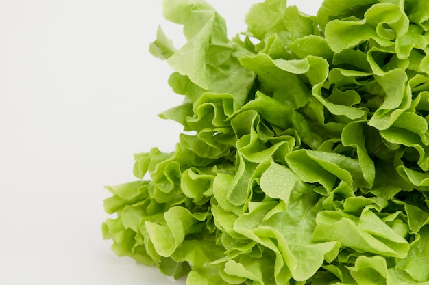Odosobniony lattuce warzywo na bielu. zdrowe jedzenie.