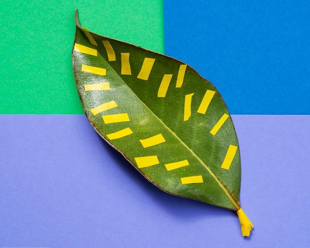 Odosobniony liść z kolorowym tłem