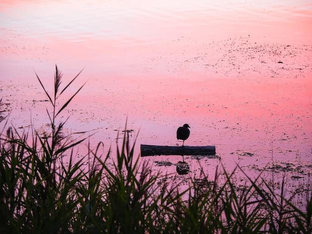 Odpoczynek ptaka o zachodzie słońca. ptak jeziorny odpoczywa wieczorem na jednej nodze.