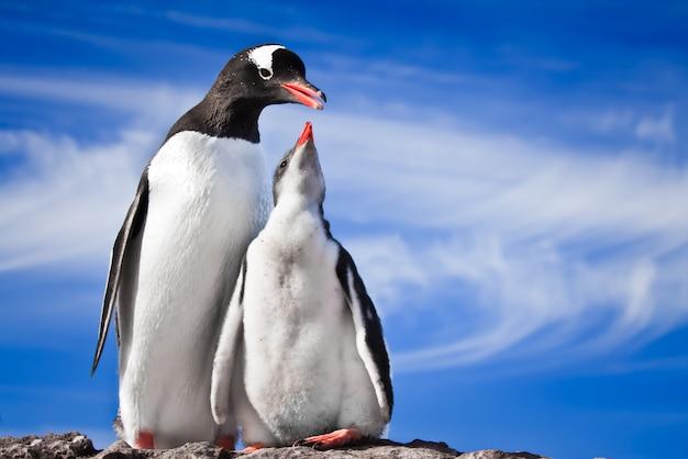 Odpoczywają dwa pingwiny