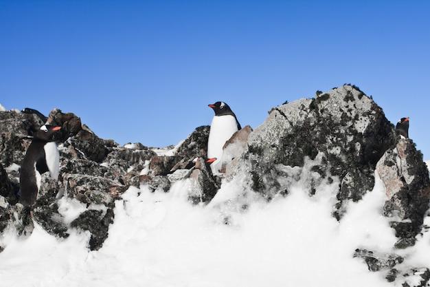 Odpoczywające pingwiny