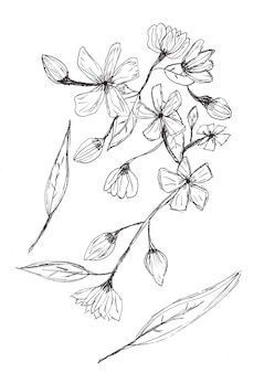 Odręczny rysunek kwiatów i liści czarnym tuszem na białym papierze