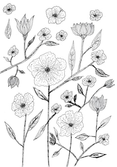 Odręczny rysunek kwiatów i liści z czarnym tuszem na białym papierze