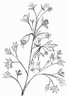 Odręczny rysunek kwiatów i liści z czarnym tuszem, na białym tle