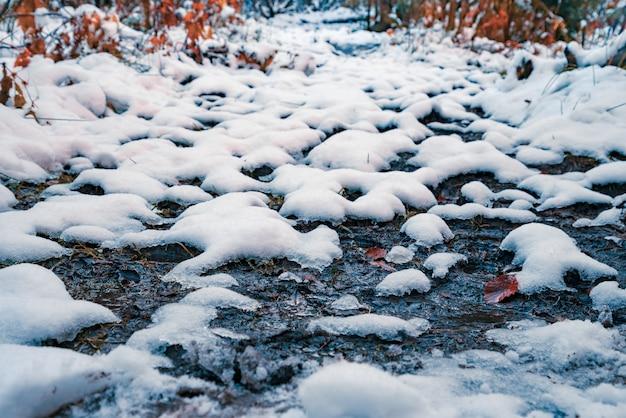 Odrobina śnieżnobiałego puszystego śniegu na przezroczystych małych kałużach w słonecznym zimowym lesie w malowniczych karpatach