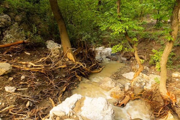 Odsłonięte korzenie drzew po niedawnych powodziach spowodowały erozję wybrzeża.