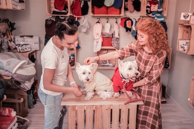 Odzież dla psów. widok z góry dwóch stylowych przyjaciółek, którzy wybierają ubrania dla swoich uroczych psów