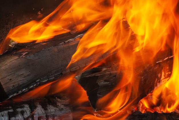 Ogień płonący las tło z miejsca kopiowania. zamknąć widok. może być wykorzystany do twojej kreatywności.