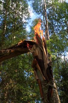 Ogień w drewnie