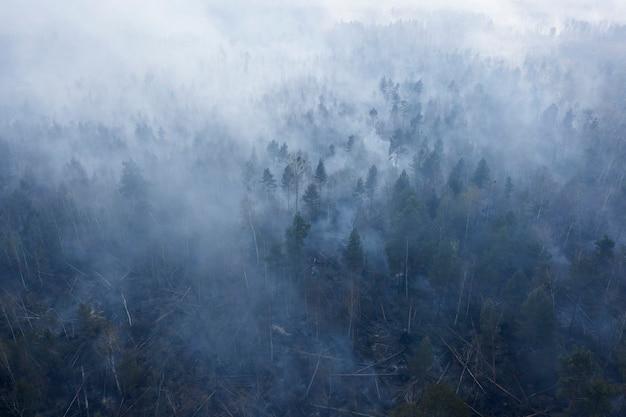 Ogień w lesie, gęsty dym, płonący torf. widok z drona.