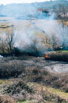 Ogień w lesie w albańskim lesie po południu
