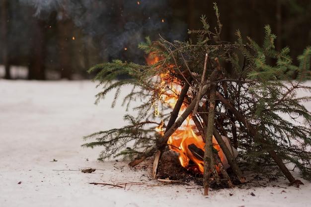 Ognisko gałęzi jodłowych w zimowym lesie, przetrwanie w zimnie i dzika przyroda