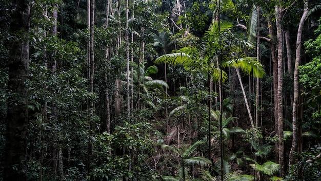 Ogólny strzał zamkniętego lasu z paprociami