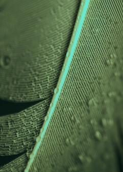 Ogólny widok kropelek wody na piórku