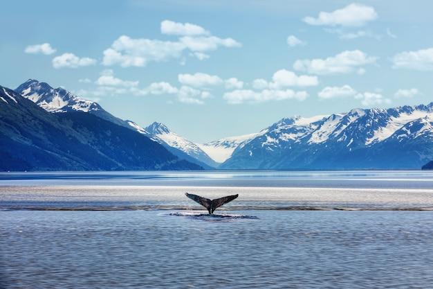 Ogon humbaka z lodowymi górami na alasce