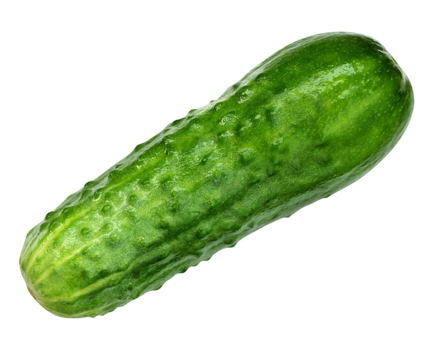 Ogórek zielony na białym tle. jedno świeże warzywo, ogórek z pryszczami.