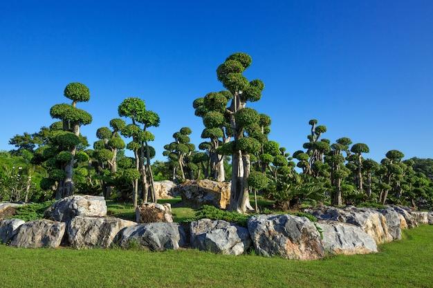 Ogród bonsai w harmonii z naturą w parku.