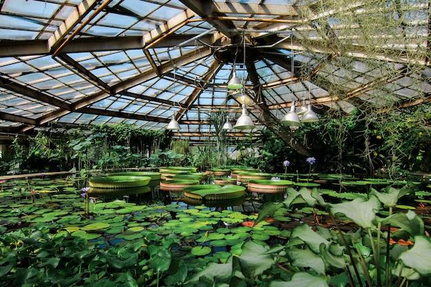 Ogród botaniczny bin ras w ciągu dnia