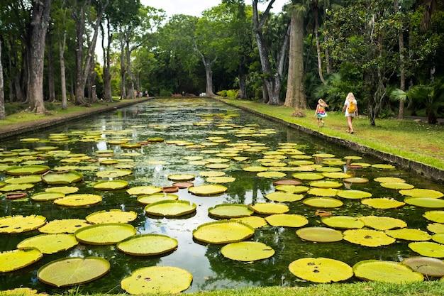 Ogród botaniczny na rajskiej wyspie mauritius. piękny staw z liliami. wyspa na oceanie indyjskim.
