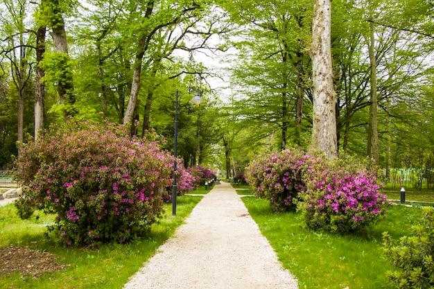 Ogród i park, ogród botaniczny zugdidi w gruzji. ogród wiosenny.