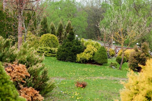 Ogród, krajobraz o geometrycznych kształtach krzew i krzew ozdobiony kolorowymi kwiatami kwitnącymi na zielono